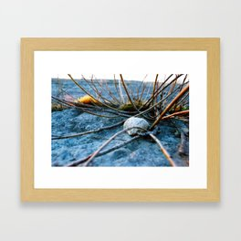 Even Here Life Can Take Root Framed Art Print