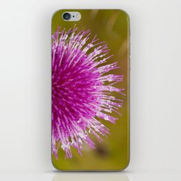Thistle flower 6389 iPhone Skin