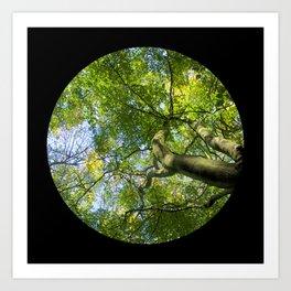 Trees from below 3 Art Print