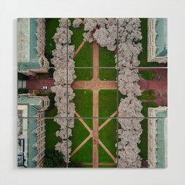UW Cherry Blossoms: Spring Wood Wall Art