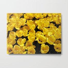 Yellow Sunlit Tulips Metal Print