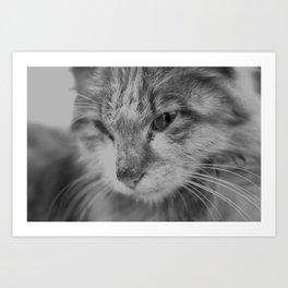 Black and White Turkish Winter Cat Art Print