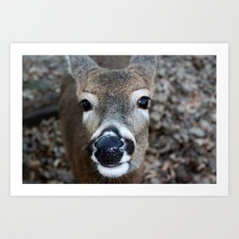 Woodland Companion Art Print