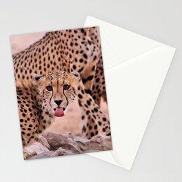 Cheetah Brothers of the Kalahari Stationery Cards