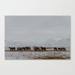 Of horses and mountains Canvas Print