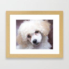 The Innocence of a Puppy Framed Art Print