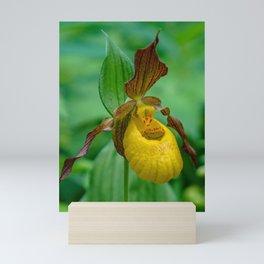 Yellow Lady's Slipper Mini Art Print