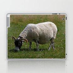 Sheep Baaaaa... Laptop & iPad Skin