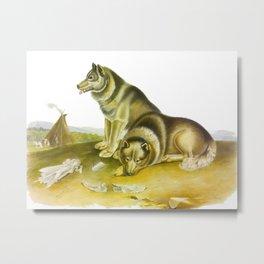 Esquimaux Dog Metal Print