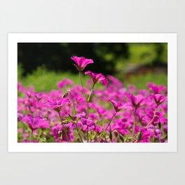 Pink Cransebill Art Print