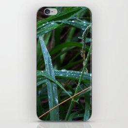 Dewdrop Grass iPhone Skin
