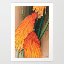 Red Hot Poker - Torch Lily - Botanical Print Art Print