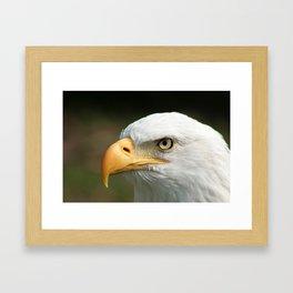 Bald Eagle Watching Framed Art Print