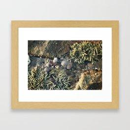 Grapes by the ocean. Framed Art Print
