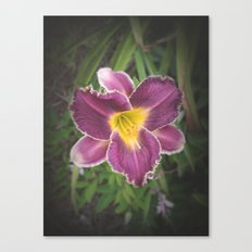 Lily Wild Canvas Print