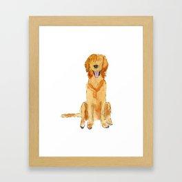 Golden Retriver Framed Art Print