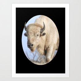 Emerging White Bison  Art Print
