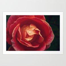 cls p rose Art Print