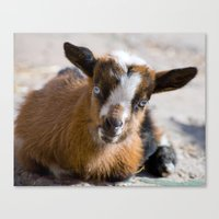 fig Canvas Prints featuring Fig by 4 on the Floor
