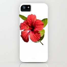 A Red Hibiscus Flower Isolated On White Background  iPhone Case