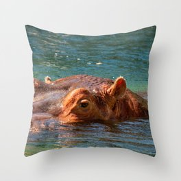 African hippo swimming in water Throw Pillow
