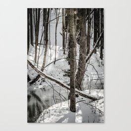 Winter Woods & Creek Canvas Print