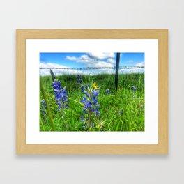 Bluebonnet 1 Framed Art Print