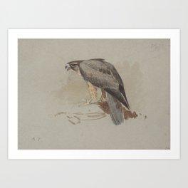 Archibald Thorburn (1860-1935) A Hawk Art Print