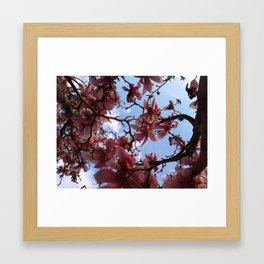 Magnolia Vision Framed Art Print