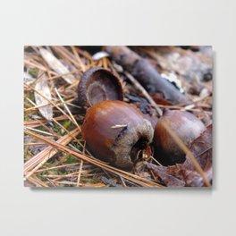 acorns II Metal Print
