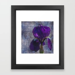 Captivating Iris Framed Art Print