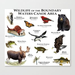 Wildlife of the Boundary Water Canoe Area Canvas Print