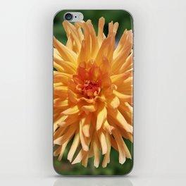 Stunning Apricot Dahlia iPhone Skin