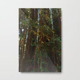 Redwood Forest V Metal Print