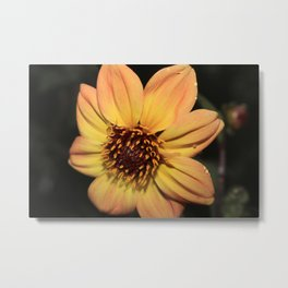 Blooming Bright Sun Flower Metal Print