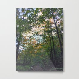 Sky forest Metal Print