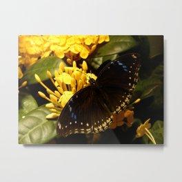 Black Butterfly Metal Print