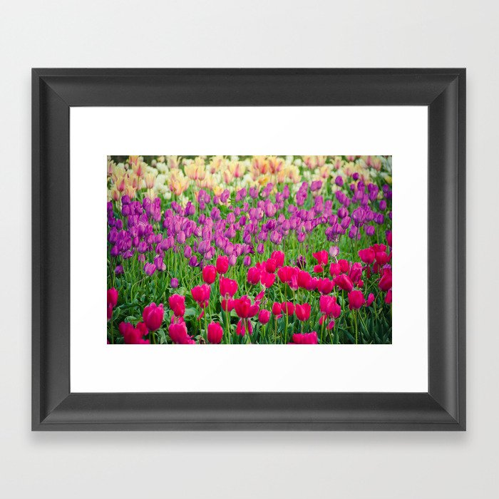 Fields of Color I, Woodburn Tulip Festival Framed Art Print