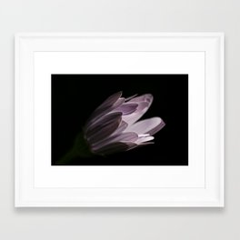 White flower 0502 Framed Art Print