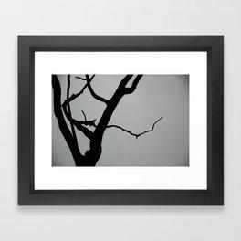 TREE ON JOANNA BALD Framed Art Print
