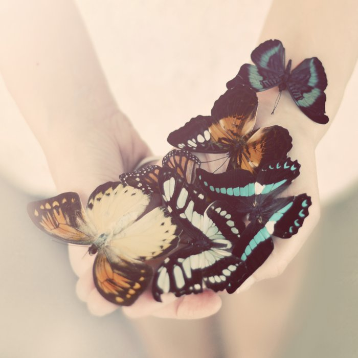 butterfly collector Comforters