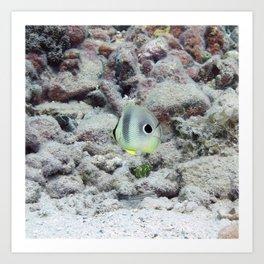 Watercolor Fish, Foureye Butterflyfish 01, St John, USVI Art Print