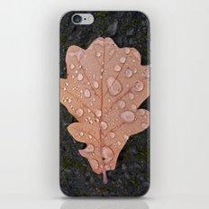 autumn leaf VII iPhone & iPod Skin