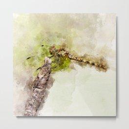 "Yellow dragonfly ""Sympetrum striolatum"" Metal Print"