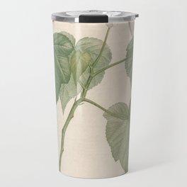 sparrmannia africana Redoute Roses 3 Travel Mug
