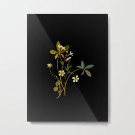 Saxifragia Granulata and Potentilla Alba Cinquefoil Paper Flower Collage Vintage Botanical Floral Metal Print
