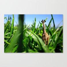 Miniature Giraffe Canvas Print
