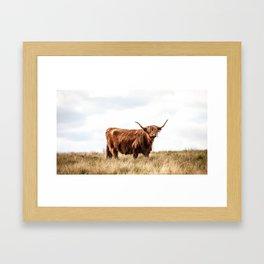 Highland Coo IV Framed Art Print