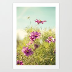 summer cosmos Art Print