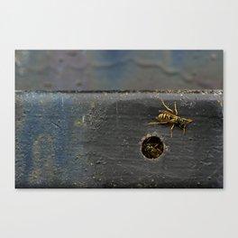 Yellow Jackets Canvas Print